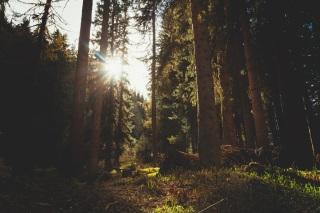 coniferous-conifers-environment-3186
